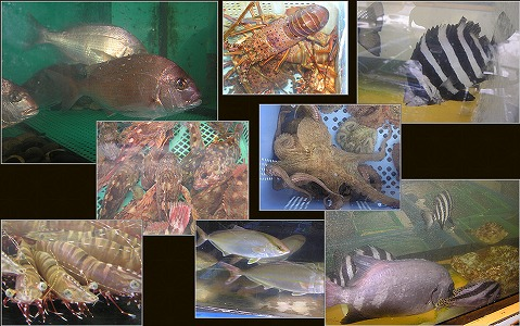 明石浦の天然魚(前モン)